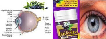 Agen Pengobatan Herbal Mata- nutrisi kesehatan mata online